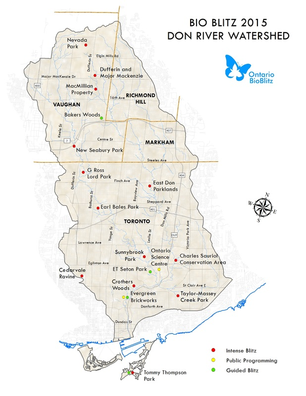 2015 Don River Watershed - Ontario BioBlitz